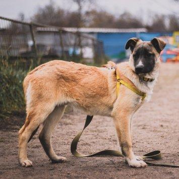Валли - Собаки в добрые руки