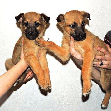 Кай и Герда - Собаки в добрые руки