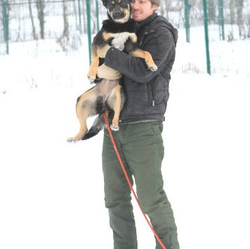 Клепа - Собаки в добрые руки
