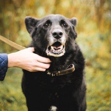 Багги - Собаки в добрые руки