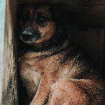 Дамка - Собаки в добрые руки
