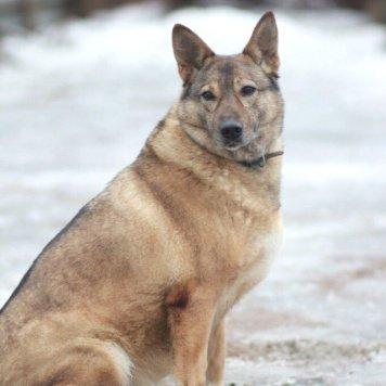 Надя - Собаки в добрые руки