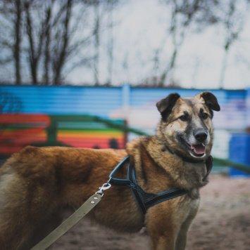 Тайфун - Собаки в добрые руки