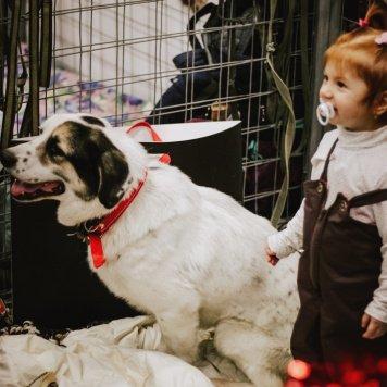 Фиат - Собаки в добрые руки