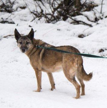 Эджи - Собаки в добрые руки