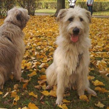Шарль - Собаки в добрые руки
