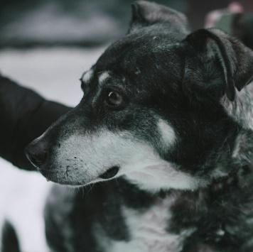 Эрна - Собаки в добрые руки
