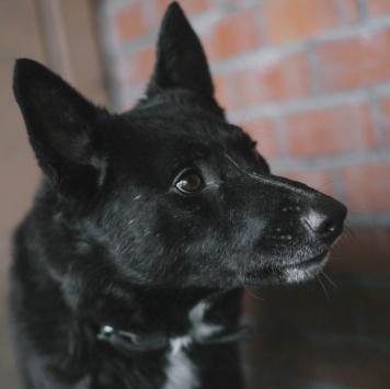 Юша - Собаки в добрые руки