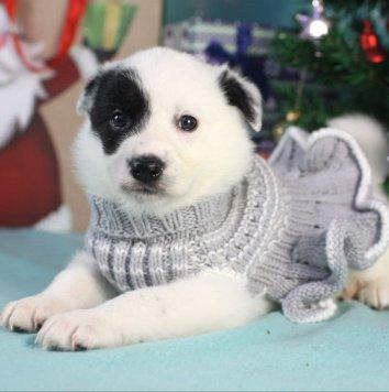 Бэтти - Собаки в добрые руки