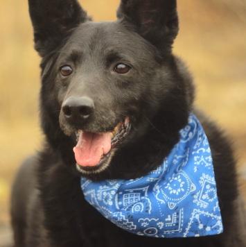 Черный Арик - Собаки в добрые руки