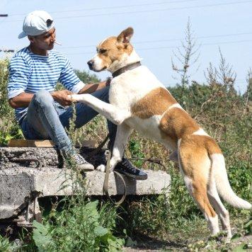 Балто - Собаки в добрые руки