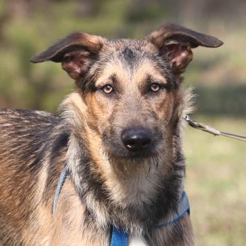 Портос - Собаки в добрые руки