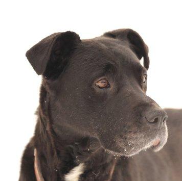 Инки - Собаки в добрые руки