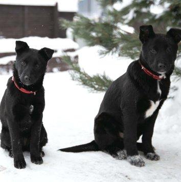 Марк и Мэгги - Собаки в добрые руки