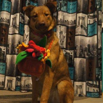 Эля - Найденные собаки