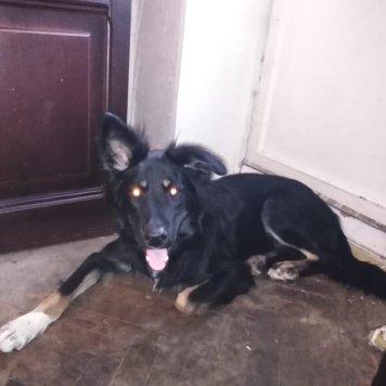Стёпа - Найденные собаки