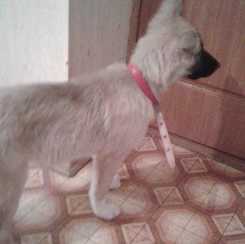 Найденыш - Найденные собаки
