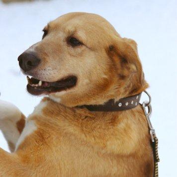 Леся - Собаки в добрые руки