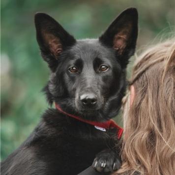 Кортни - Собаки в добрые руки