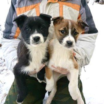 Безымянные - Собаки в добрые руки
