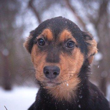 Вишенка - Собаки в добрые руки