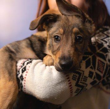 Локи - Собаки в добрые руки