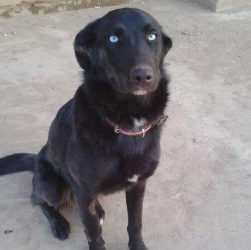 Туча - Собаки в добрые руки