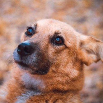 Иви - Собаки в добрые руки
