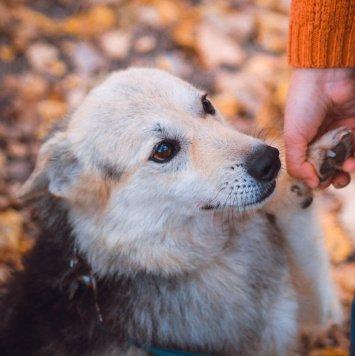 Звёздочка - Собаки в добрые руки