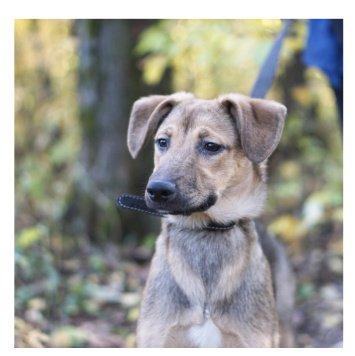 Дива - Собаки в добрые руки