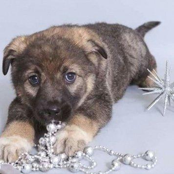 Касенька - Собаки в добрые руки