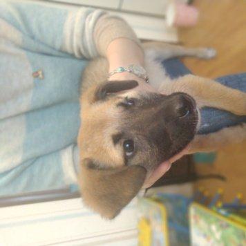 Арбуз - Найденные собаки