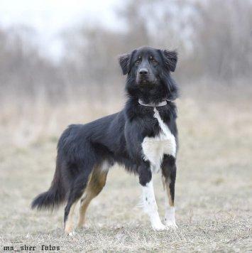Бутус - Собаки в добрые руки