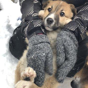 Патрик - Собаки в добрые руки
