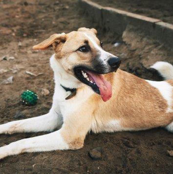 Сидор - Собаки в добрые руки