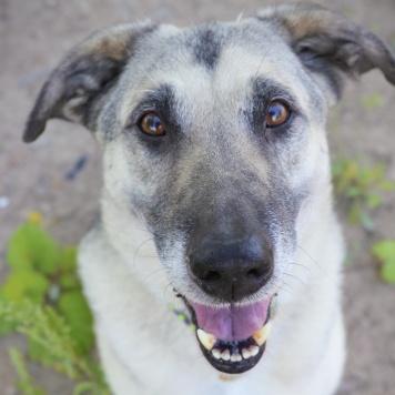Сергуня - Собаки в добрые руки