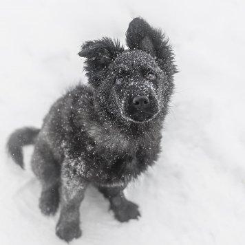 Ляля - Собаки в добрые руки