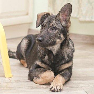 Скарлетт - Собаки в добрые руки