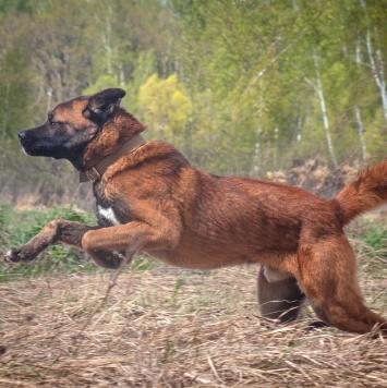 Марс - Собаки в добрые руки
