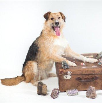 Манка - Собаки в добрые руки