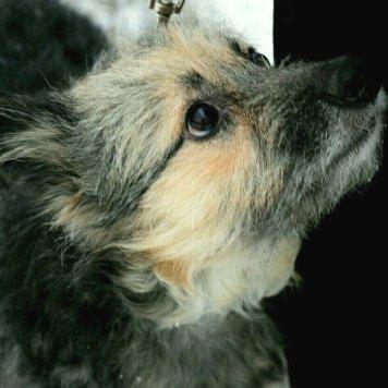 Ленка - Собаки в добрые руки