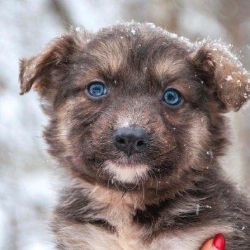 Энджи - Собаки в добрые руки