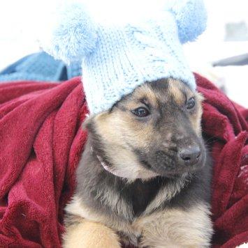 Мерси (Мерседес) - Собаки в добрые руки