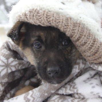 Порш(Проша) - Собаки в добрые руки