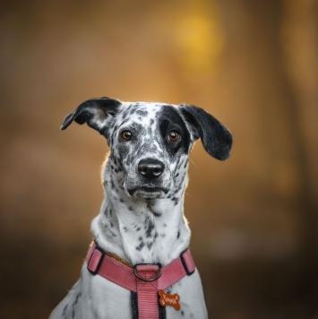 Чента - Собаки в добрые руки