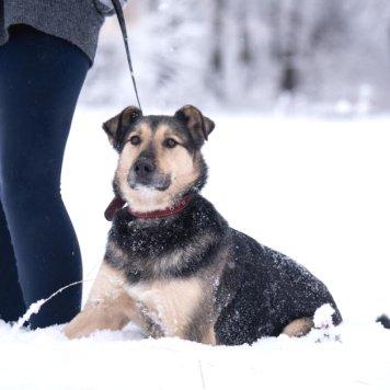 Бобби - Собаки в добрые руки