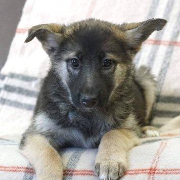 Ватсон - Собаки в добрые руки