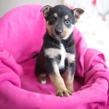 Талли - Собаки в добрые руки