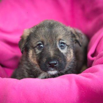 Жан - Собаки в добрые руки