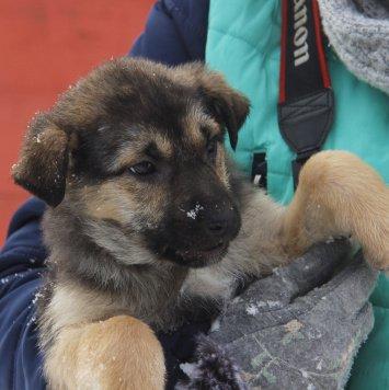 Хана - Собаки в добрые руки